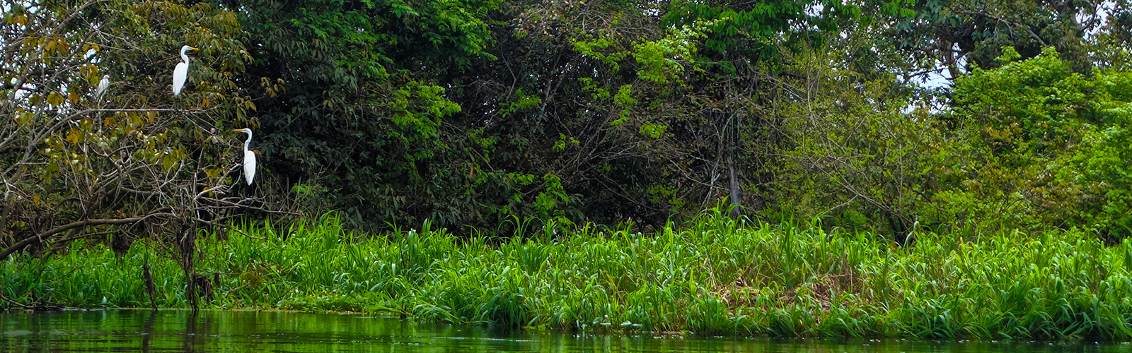 Everything You Need to Know About the Amazon Rainforest